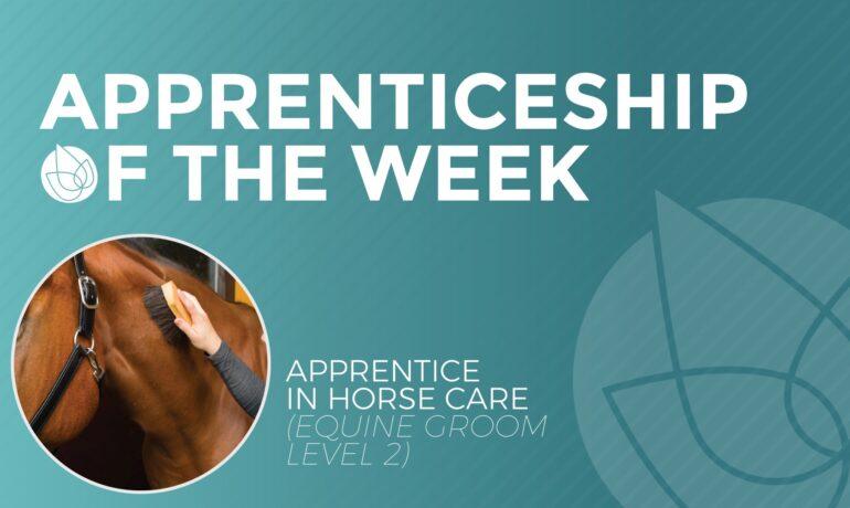 Apprenticeship of the Week - Equine Groom